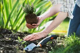 Что нужно сделать при посадке растений?