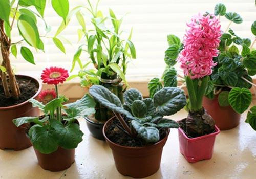 ТОП-5 лучших удобрений для комнатных растений!