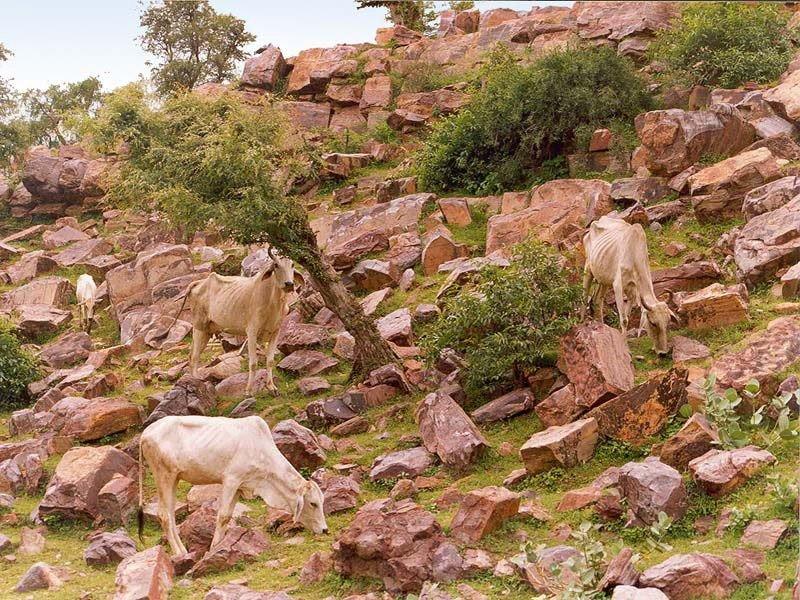 Говардхан - священный холм в Индии