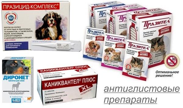 Противоглистные инвазии для собак