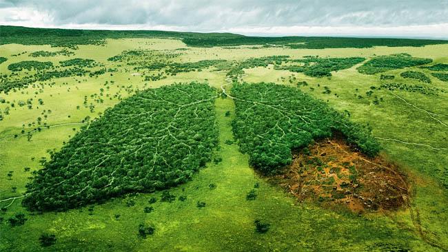 Как мы «помогаем» сохранять экологию