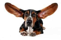 Жадное слушание приводит к изменениям в жизни