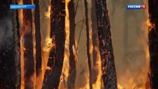 Средства, собранные на фестивале Элвиса в Австралии, пойдут на борьбу с лесными пожарами