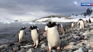 2020-й год в России объявлен Годом Антарктиды