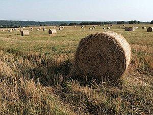 Новый закон снизит налоговую нагрузку малого бизнеса в сельском хозяйстве