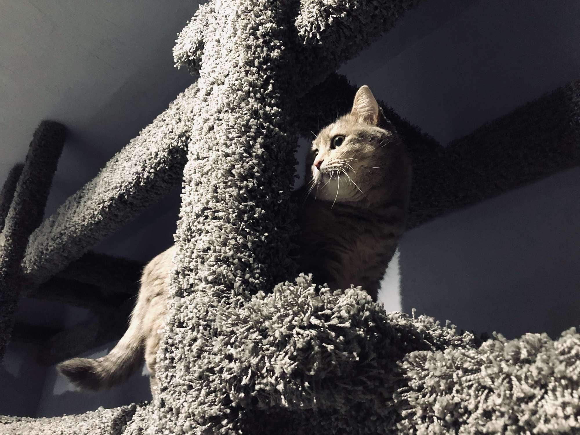 Куда деть кошку на время отпуска?