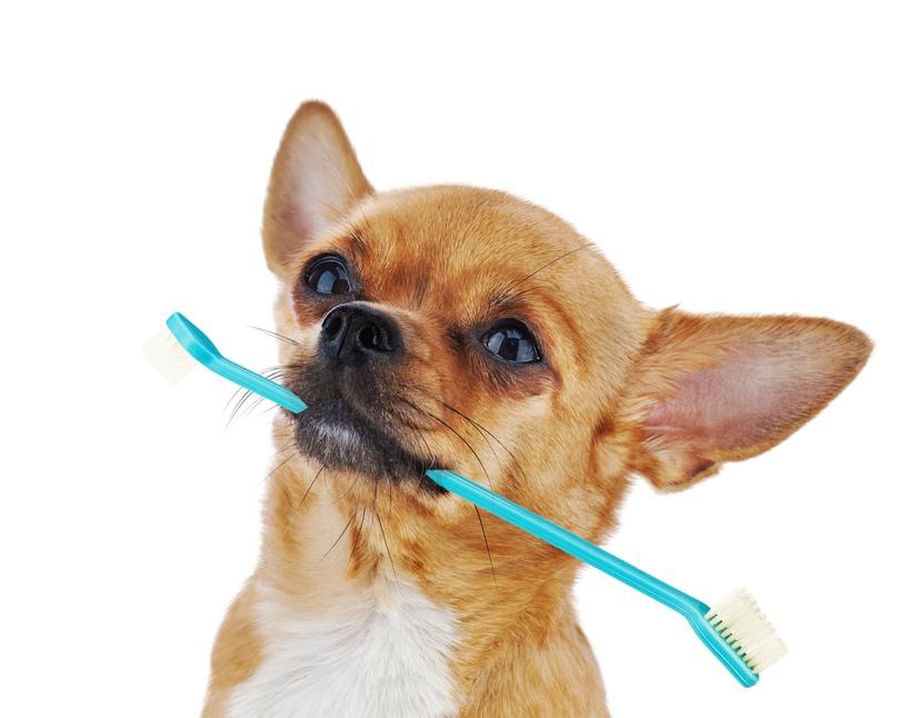 Как чистить зубы маленькой собаке дома