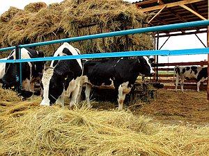 Новость: Фермерам имеют возможность разрешить продавать продукцию точно на своих участках