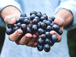 Новость: Принят закон о производстве вина фермерскими хозяйствами