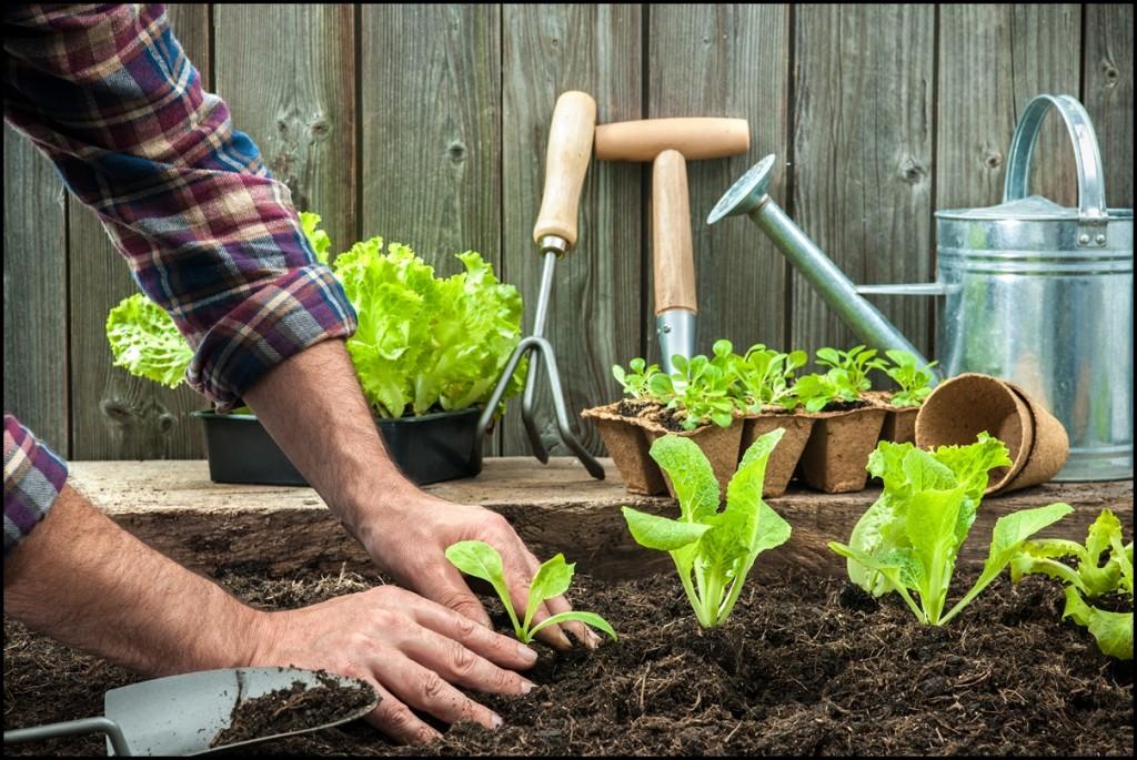 Органическое земледелие: методы борьбы за урожай