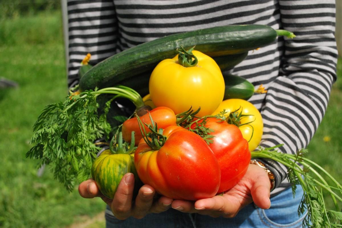 Главная цель органического земледелия - выращивание экологически чистого урожая