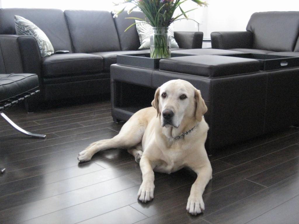 Выбор лучшего типа пола для квартиры с собакой